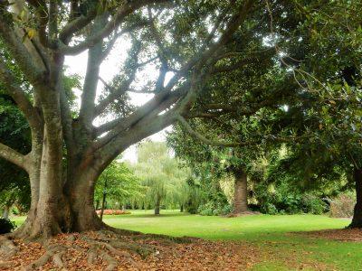 colac-botanic-gardens